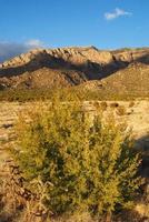 de zuidwestelijke zonsondergang van de woestijnberg met jeneverbessenboom foto
