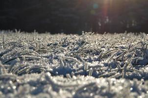 winter bomen foto