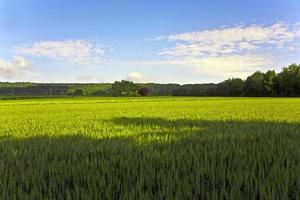 landschap met hectare, maïs en witte wolken foto