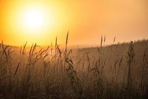 maïsveld zon foto