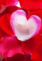 Valentijnsdag kaart. foto