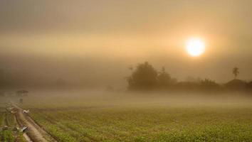 landschap van maïs landbouw veld en zonsopgang in de mist foto