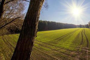 zonsondergang over het veld