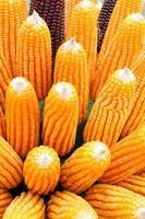 korrels van rijp maïs. macro-afbeelding. foto