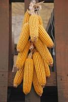 hangende gedroogde maïs foto