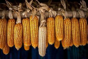 gedroogde maïs - sapa vietnam foto