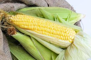 maïs geïsoleerd op een witte achtergrond foto