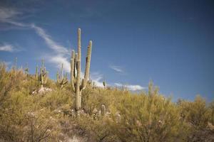 woestijnlandschap - 1 cactus met bergen foto