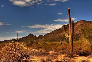 woestijn saguaro foto