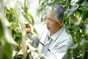 landbouw foto