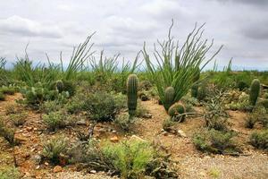 woestijn uitzicht op Catalina bergen in Tucson Arizona foto