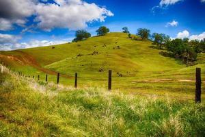 glooiende groene heuvels foto