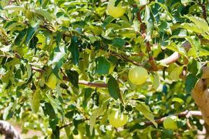 appelboomgaard foto