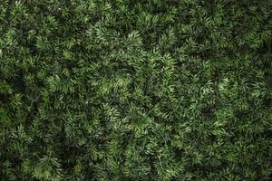 gras textuur foto