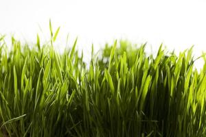 groen gras foto
