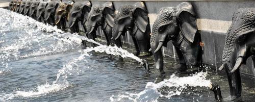 olifant ornamet. detailopname. foto