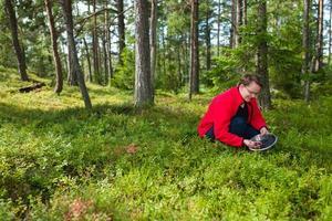 bosbessen verzamelen foto