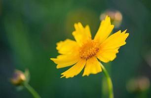 zomer bloem foto