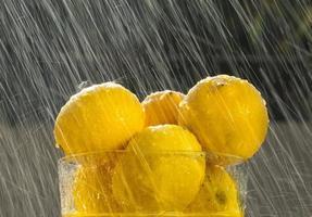 zomerregen foto