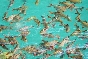 vissen in helder water foto