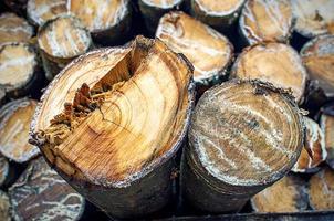 rubber hout foto