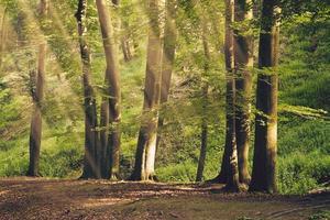 mooie zomerse bos foto