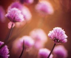 roze zomerbloemen foto