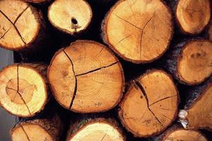 blok hout