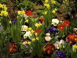 voorjaar foto