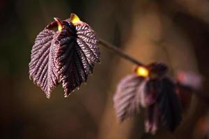 lente gebladerte