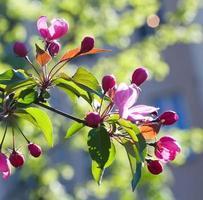 lente bloemen. foto