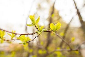 lente bladeren foto