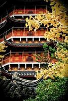 herfst in suzhou, china foto