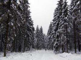 winterlandschap. foto
