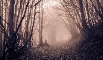 spookachtig landschap foto