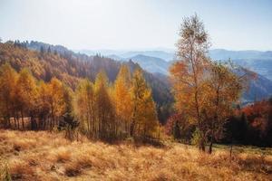 herfst landschap foto