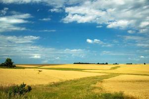 tarwe landschap foto