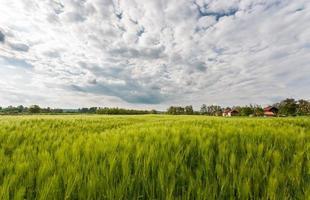 landelijk landschapspanorama foto