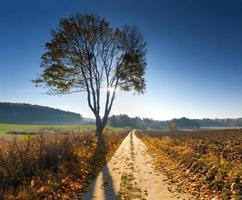 herfst landelijk landschap