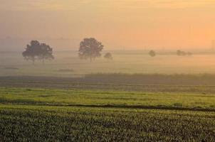 landschap van het platteland in de vroege ochtend. foto