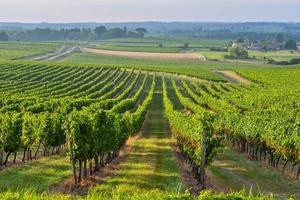 wijngaard zonsopgang - landschap-bordeaux wijngaard foto