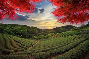 beeld van mooi landschap, taiwan foto