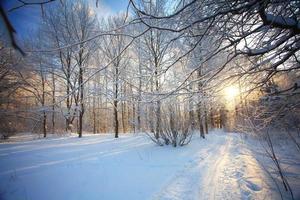 koude winter boslandschap sneeuw