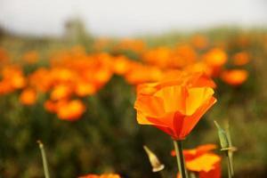 oranje bloem in het landschap
