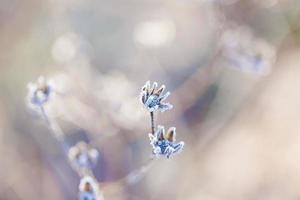 poëtische winter foto