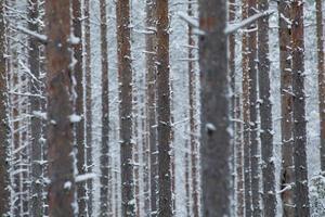 winter dag foto