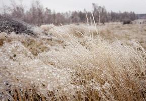 winter detail foto
