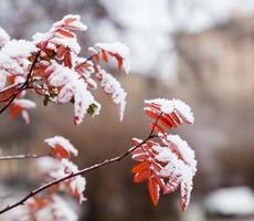 winter struik foto