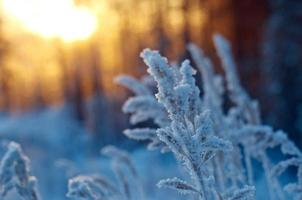winters tafereel foto