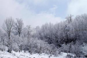 winter hout